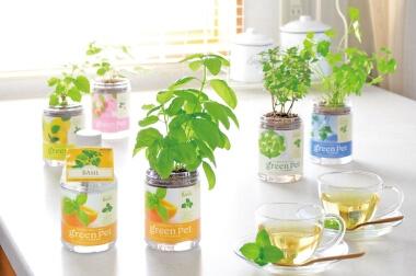 用意するのは水だけ! かわいいペットボトル型水耕栽培セット